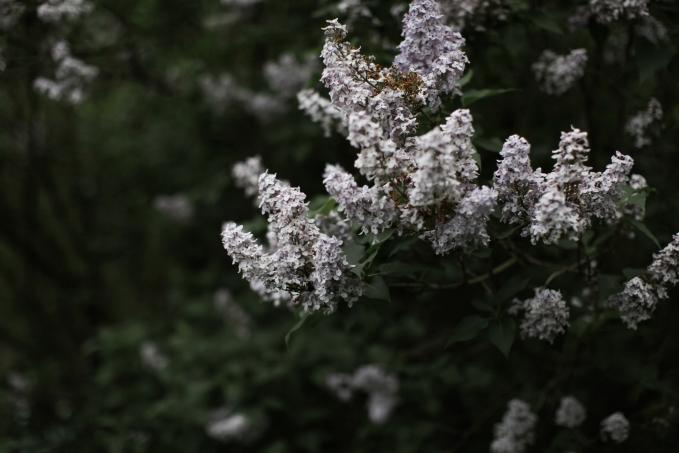 elynmariephoto.com